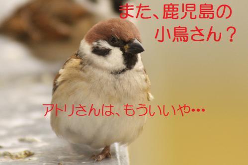 000_20121221214617.jpg
