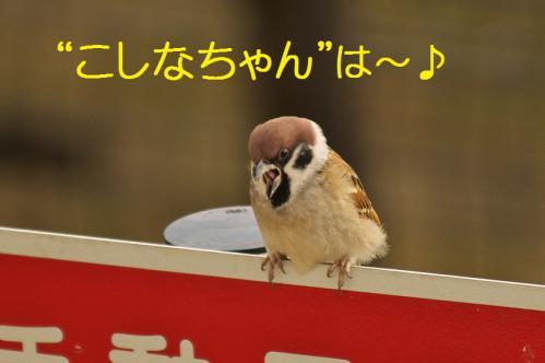 003_20121223183752.jpg