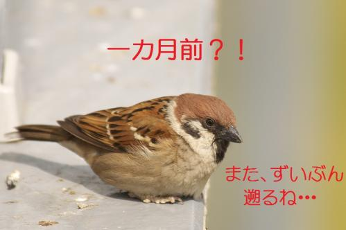 010_20120426195239.jpg