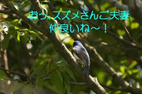 010_20120430195428.jpg