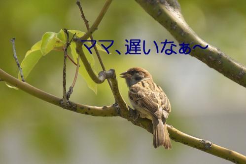 010_20120531224810.jpg