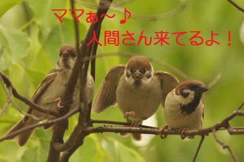 010_20120630222339.jpg