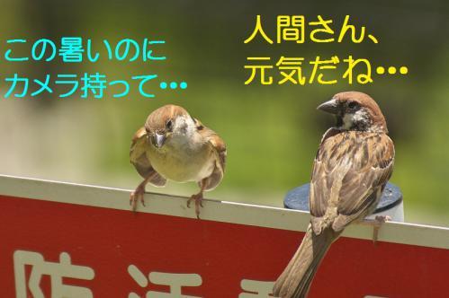010_20120731204345.jpg