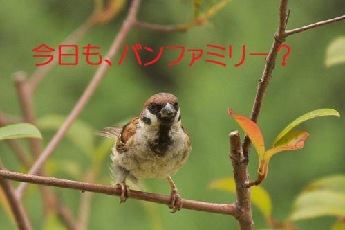 010_20120822221732.jpg