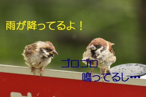 010_20120904224404.jpg