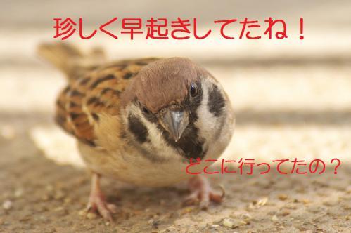 010_20121030223101.jpg