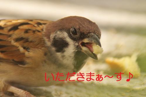 010_20121102220019.jpg