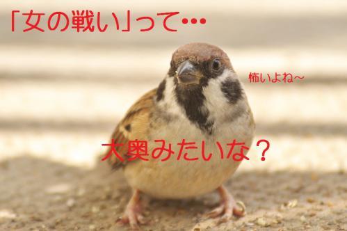 010_20121112215142.jpg