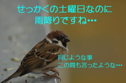 010_20121117212445.jpg