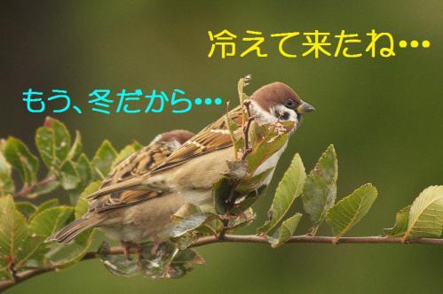 010_20121126222947.jpg