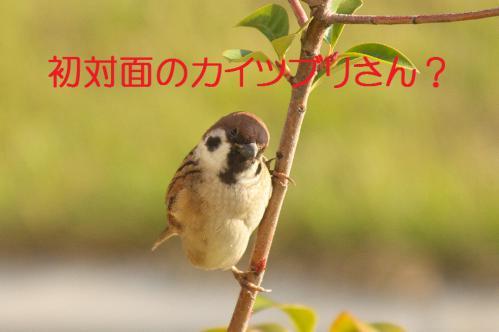 010_20121130220418.jpg
