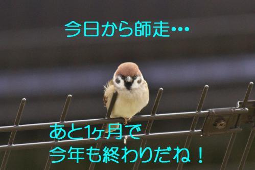 010_20121201214656.jpg