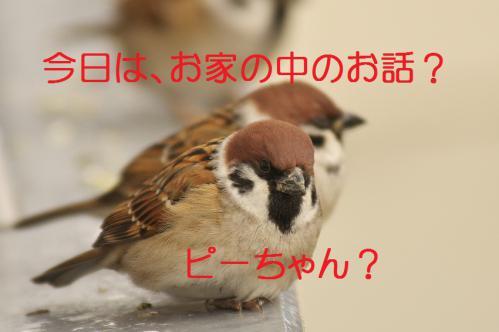 010_20121203223832.jpg