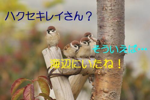 010_20121205220905.jpg