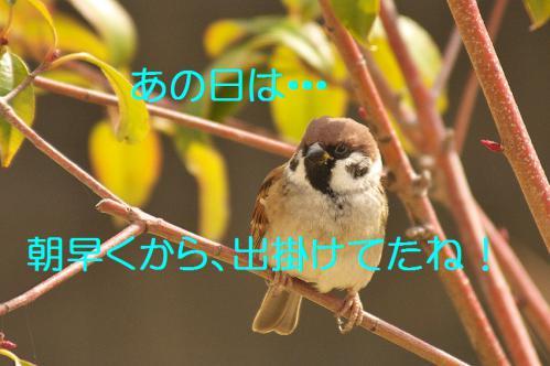 010_20121206193310.jpg