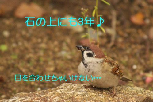 010_20121206230403.jpg