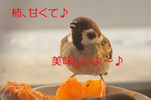 010_20121212214415.jpg