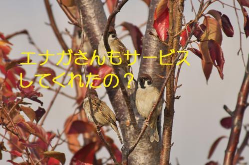 010_20121213213937.jpg