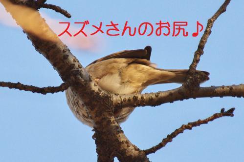 010_20121214214646.jpg
