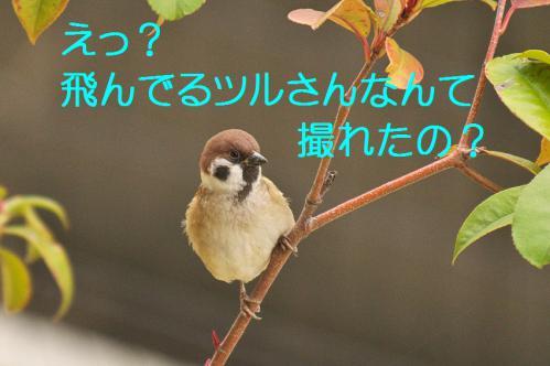 010_20121216202640.jpg