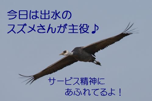 010_20121217024252.jpg