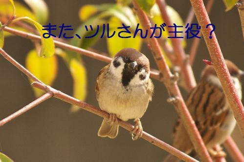 010_20121218215452.jpg