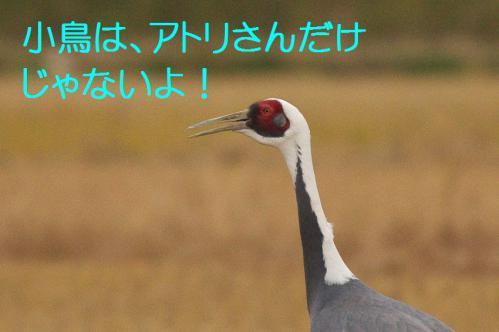 010_20121221214621.jpg
