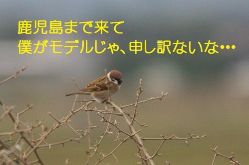 010_20121222193826.jpg