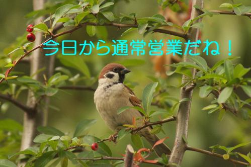 010_20121225223015.jpg