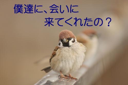 010_20121227213444.jpg