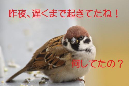 010_20121228215041.jpg