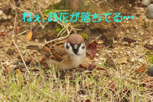 010_20121229231621.jpg