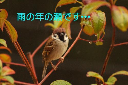 010_20121230221108.jpg