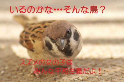 015_20121112215142.jpg