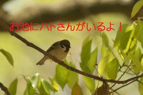 020_20120501203820.jpg