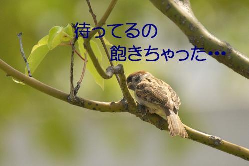 020_20120531224809.jpg