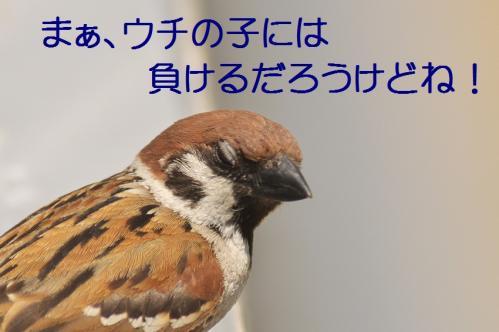 020_20120612214929.jpg