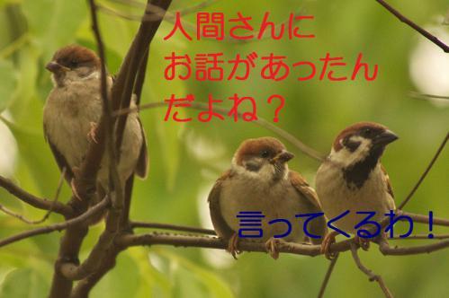 020_20120630222338.jpg
