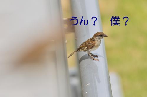 020_20120711222459.jpg