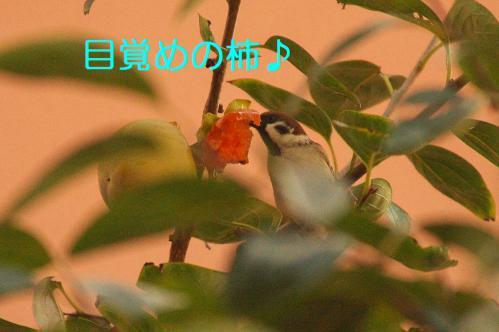 020_20121030223101.jpg
