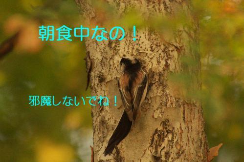 020_20121031214756.jpg