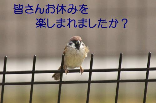 020_20121103224650.jpg