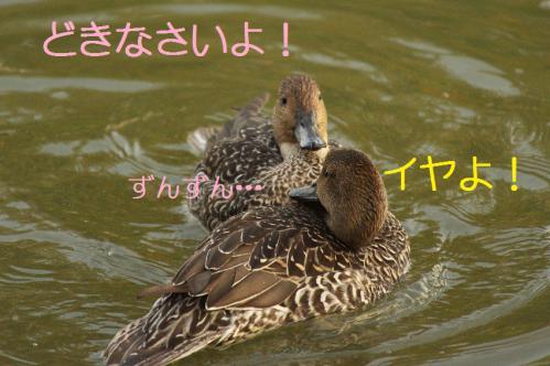 020_20121112215141.jpg