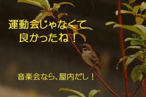 020_20121117212449.jpg