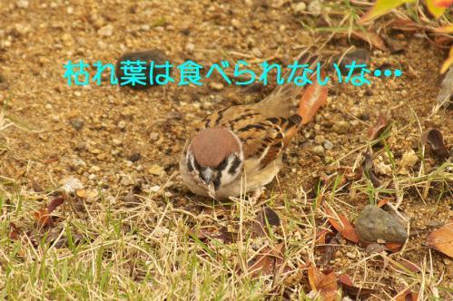 020_20121202191346.jpg