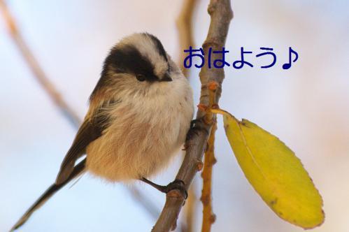 020_20121206193316.jpg