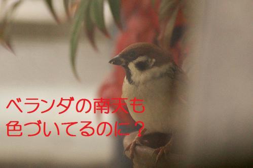 020_20121206222351.jpg