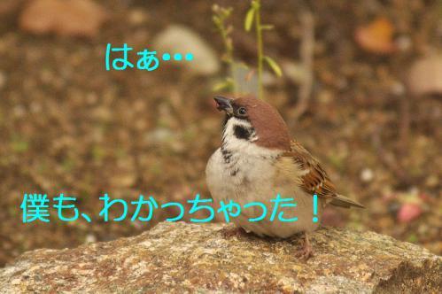 020_20121206230411.jpg