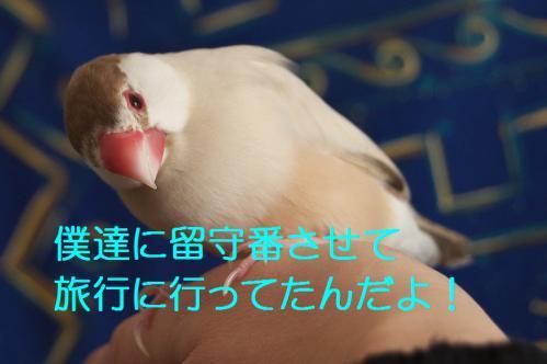 020_20121209222748.jpg