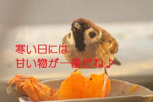 020_20121212214418.jpg